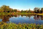 Enchanting landscape reflecting nature's beauty